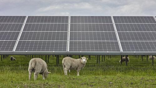 green solar module technology